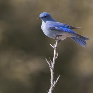 bluebird0012