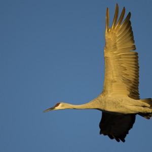 crane0007