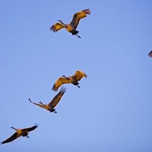 crane0013