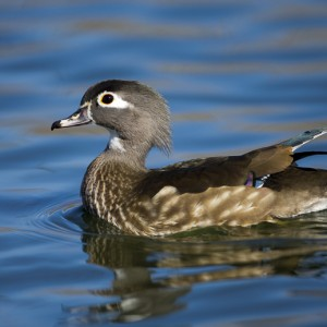 duck0020