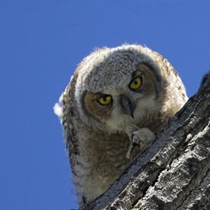 owl0003