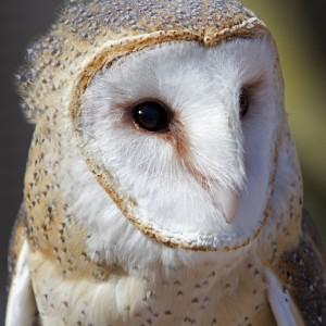 owl0004
