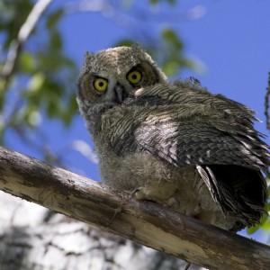owl0005