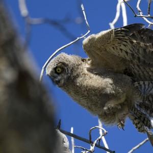 owl0006