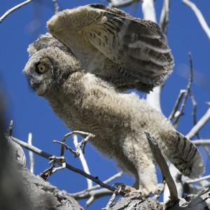 owl0011