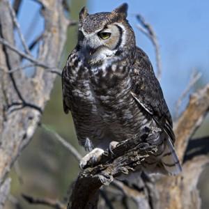 owl0013