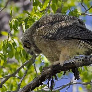 owl0014
