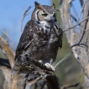 owl0015