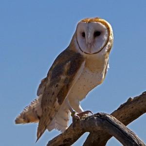 owl0017