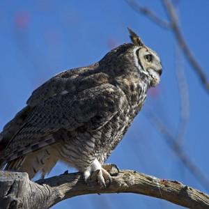 owl0019