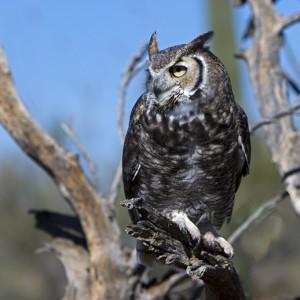 owl0021