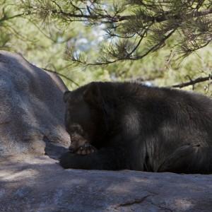 bear0004