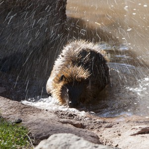 beaver0002