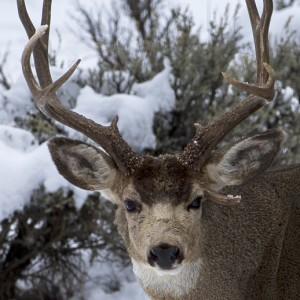 deer0003