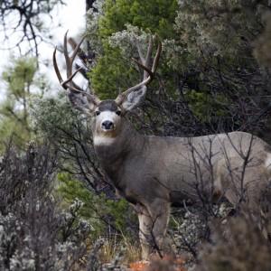 deer0010