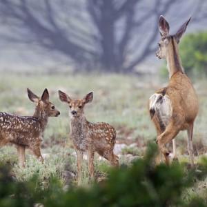 deer0013