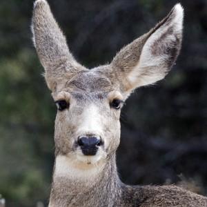 deer0023
