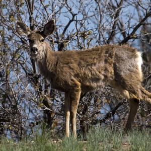 deer0024