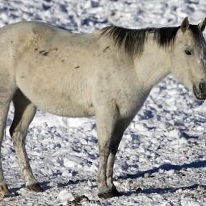 horses0003