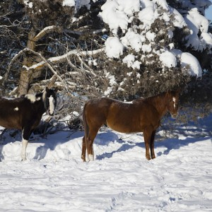 horses0004