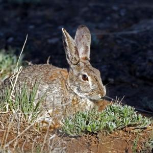 rabbit0002