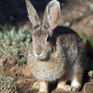 rabbit0004