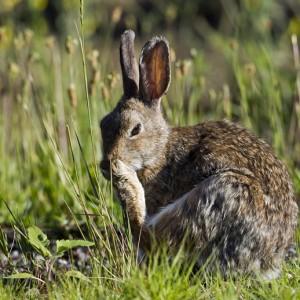 rabbit0005