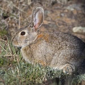 rabbit0006