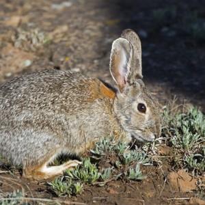 rabbit0007