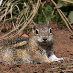 squirrel0001