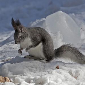 squirrel0002