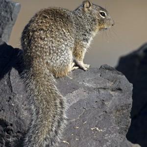 squirrel0004