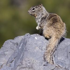 squirrel0006