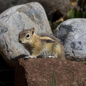 squirrel0007