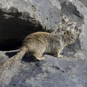 squirrel0008