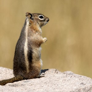 squirrel0009