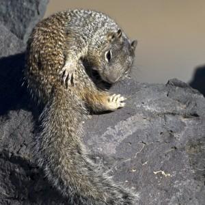 squirrel0010