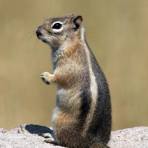 squirrel0011