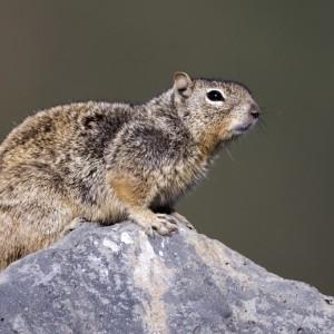 squirrel0012