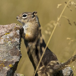 squirrel0013