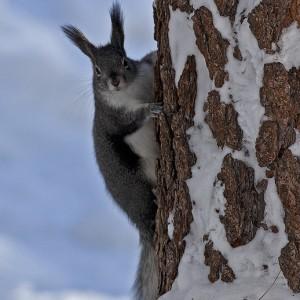 squirrel0014