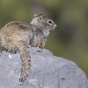 squirrel0015