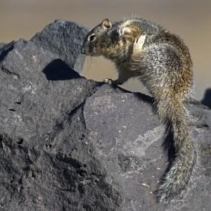 squirrel0017