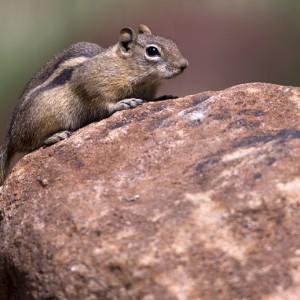 squirrel0018