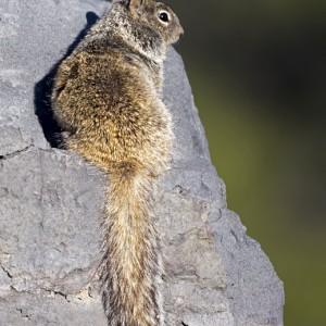 squirrel0019