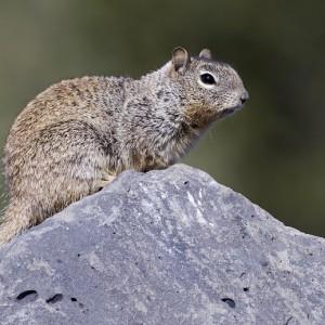 squirrel0021