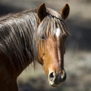 wildhorses0001