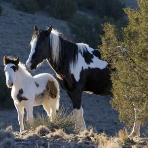 wildhorses0002
