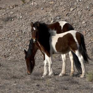 wildhorses0003
