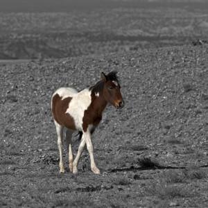 wildhorses0005